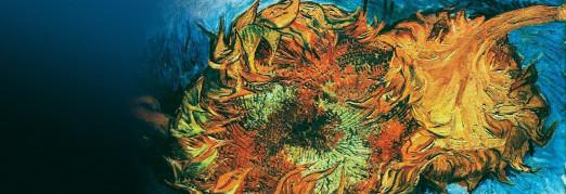 Концерт «Звучащие полотна. Ван Гог». Два органа и восемь саксофонов