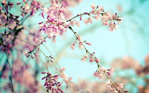 Концерт Проект «Звучащие полотна». Боттичелли и Дега.  Времена года. Весна