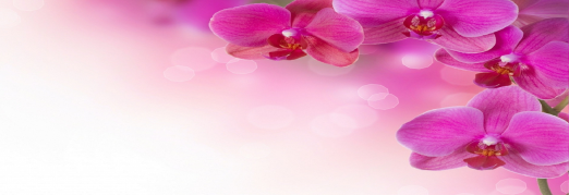 Концерт Концерт ко Дню Святого Валентина. «Моцарт. Маленькая ночная серенада. Альбинони. Адажио. Вивальди. Времена года: Зима, Весна»